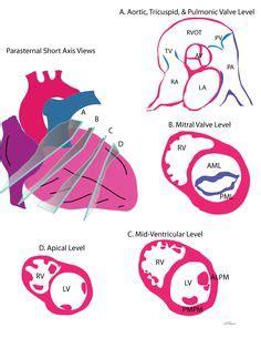 Cardiac Sonographer Resume Template and Job Description